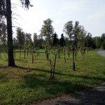 Bělský les - zeleň IV-1920px