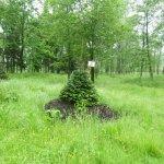 IMG_0273_Bělský les