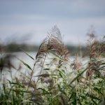 KAB_0998_1920px-Heřmanický rybník