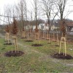 Výsadba zeleně_Bělský les