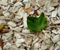 wood-chips-1722422_1920-1024x768