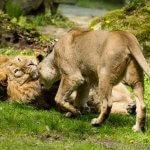 lvi_indicti_zoo_ostrava
