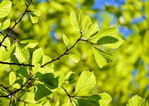 strom_listí