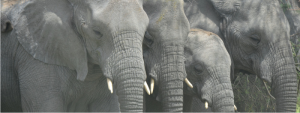 slon-kalendar-akci-2