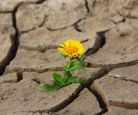 ochrana-klimatu-rubrika