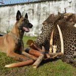 Psi pomáhají odhalit pašeráky_foto A.Sniegon - kopie