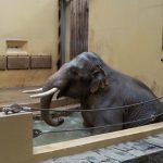 Sloní samec v bazénu_foto O.Matěj