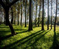 Zeleň v Ostravě