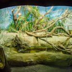 Zoo Papua