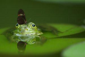 Hledej pramen vody žába