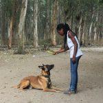 Trénink psů v Kongu_foto A. Sniegon